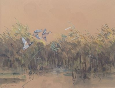 Kunstenaar Jo Schrijnder 6103 Jo Schrijnder opvliegende eenden boven rietkraag in de polder Gemengde techniek op papier, beeldmaat 34,5 x 46,5 cm linksonder gesigneerd verkocht