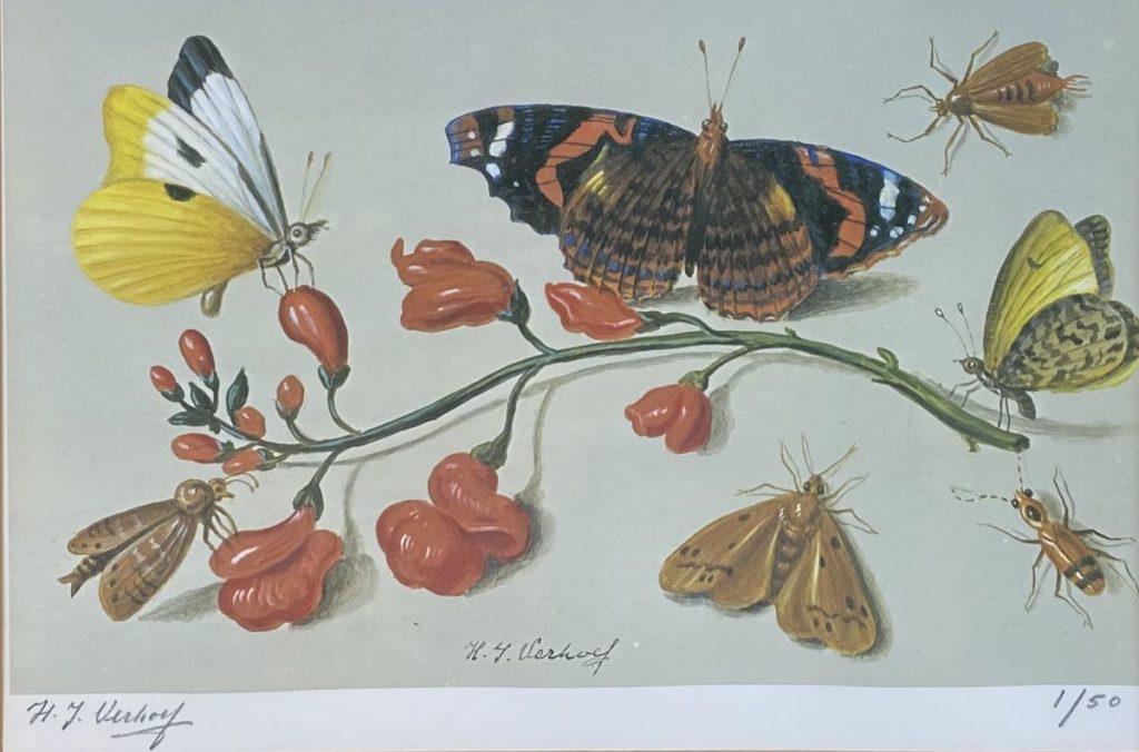 Kunst te koop bij Galerie Wijdemeren van Hans Verhoef Stilleven met vlinders, takje en insecten litho, beeldmaat 19 x 27 cm linksonder handgesigneerd, rechtsonder oplage 1/50