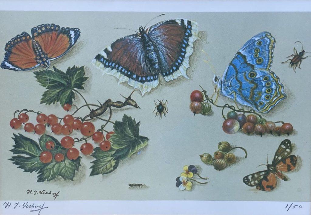 Kunst te koop bij Galerie Wijdemeren van Hans Verhoef Stilleven met vlinders, bessen en viooltjes litho, beeldmaat 19 x 27.5 cm linksonder handgesigneerd, rechtsonder oplage 1/50