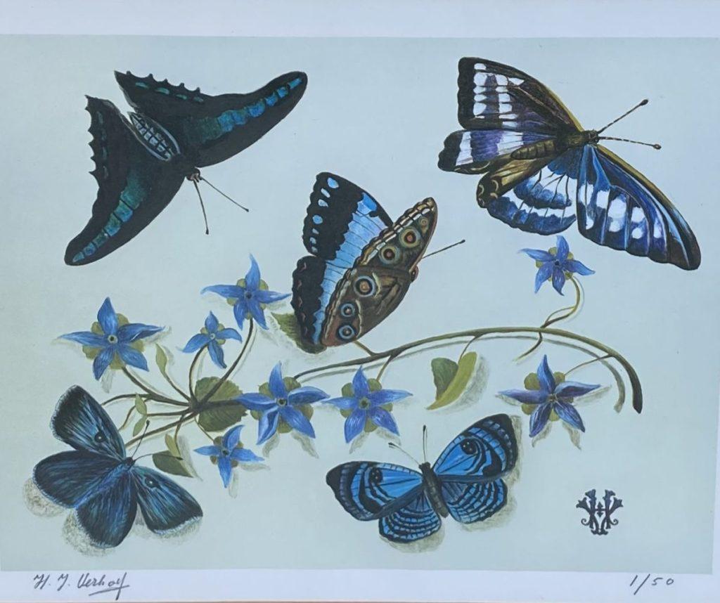 Kunst te koop bij Galerie Wijdemeren van Hans Verhoef Stilleven met blauwpaarse vlinders litho, beeldmaat 20 x 23.5 cm linksonder handgesigneerd, rechtsonder oplage 1/50
