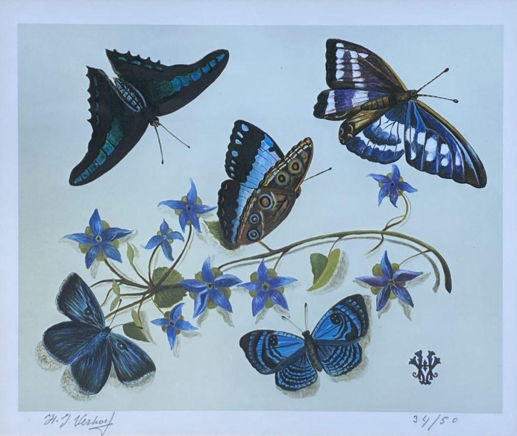 Kunst te koop bij Galerie Wijdemeren van kunstschilder Hans Verhoef Stilleven met blauwpaarse vlinders litho, beeldmaat 20 x 23.5 cm linksonder handgesigneerd, rechtsonder oplage 34/50