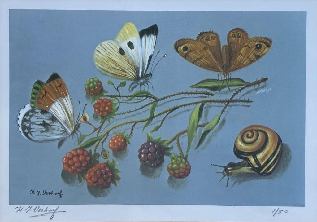 Kunst te koop bij Galerie Wijdmeren van kunstschilder Hans Verhoef Stilleven met vlinders, slakje en bramen litho, beeldmaat 19.5 x 27.5 cm linksonder handgesigneerd, rechtsonder oplage 1/50