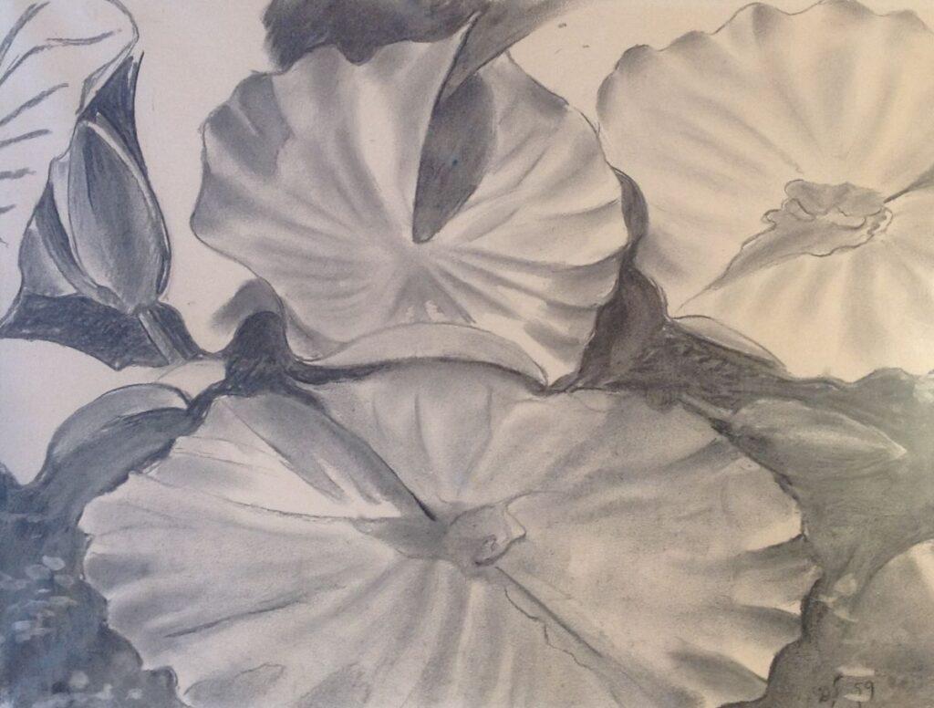 Schilderijen te koop van kunstschilder Dirk Smorenberg Waterlelies houtskool op papier, beeldmaat 35 x 47 cm rechtsonder gesigneerd met initialen en gedateerd 59, Expositie Galerie Wijdemeren Breukeleveen