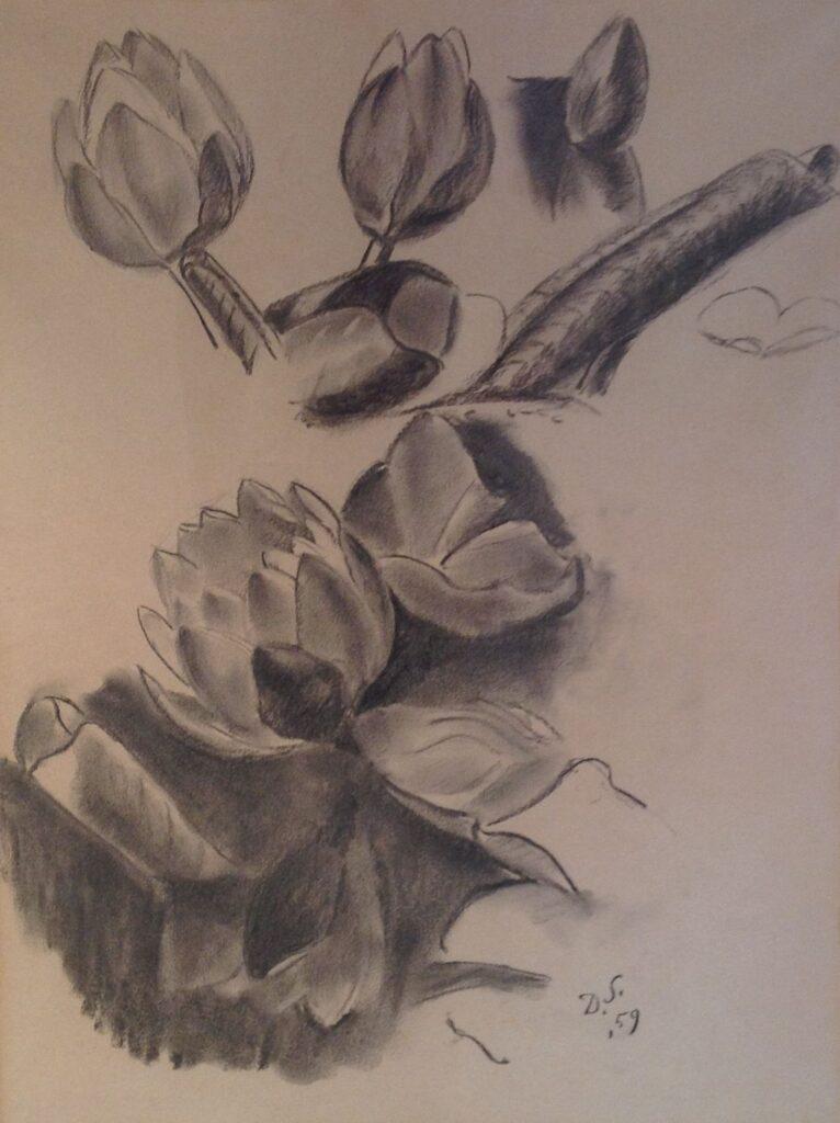 Schilderijen te koop van kunstschilder Dirk Smorenberg Studie voor knoppen houtskool op papier, beeldmaat 46,5 x 35 cm. r.o. gesigneerd met initialen en gedateerd 59, Expositie Galerie Wijdemeren Breukeleveen