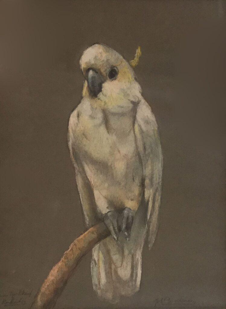 Schilderijen te koop van kunstschilder Johanna Pieneman kleine geelkuif kaketoe pastel, beeldmaat 31 x 24 cm rechtsonder gesigneerd, Expositie Galerie Wijdemeren Breukeleveen