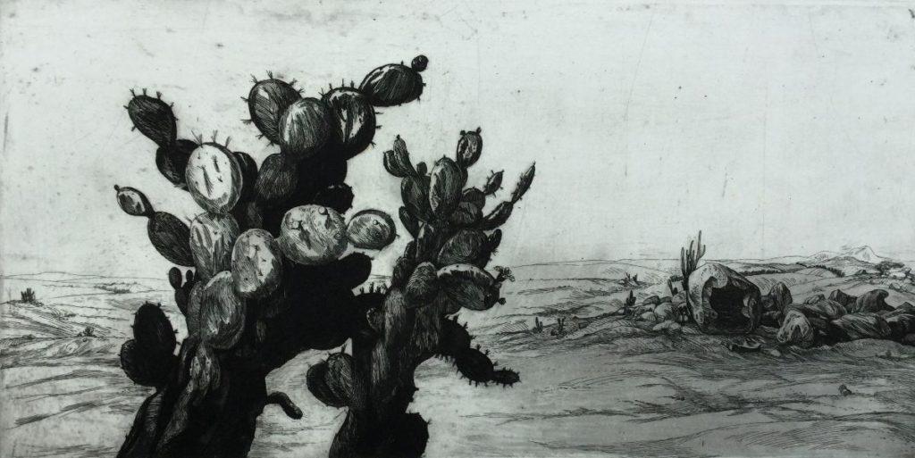 Kunst te koop bij Galerie Wijdemeren van Dick Stolwijk Cactussen ets op papier, 20,5 x 41 cm rechtsonder gesigneerd, oplage 8/25