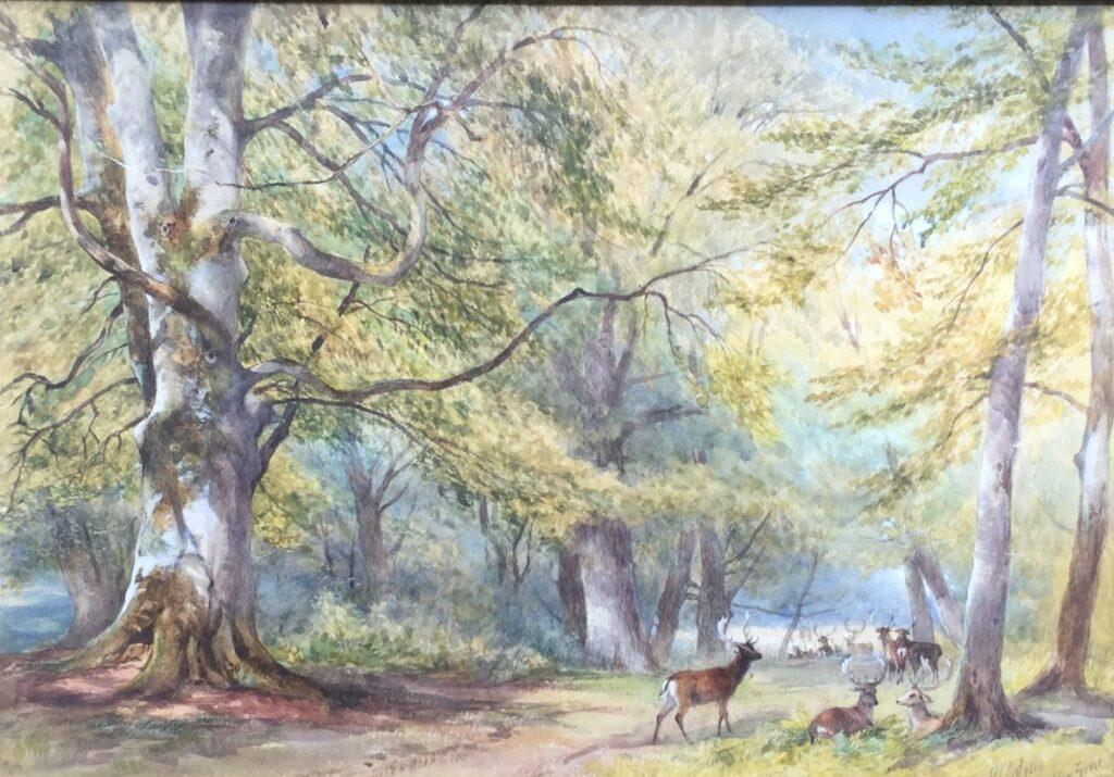 Schilderijen te koop van kunstschilderHenry Clark Pidgeon Roedel herten in New Forest 1870 gemengde techniek op papier, beeldmaat 41.5 x 58 cm rechtsonder gesigneerd, Expositie Galerie Wijdemeren Breukeleveen