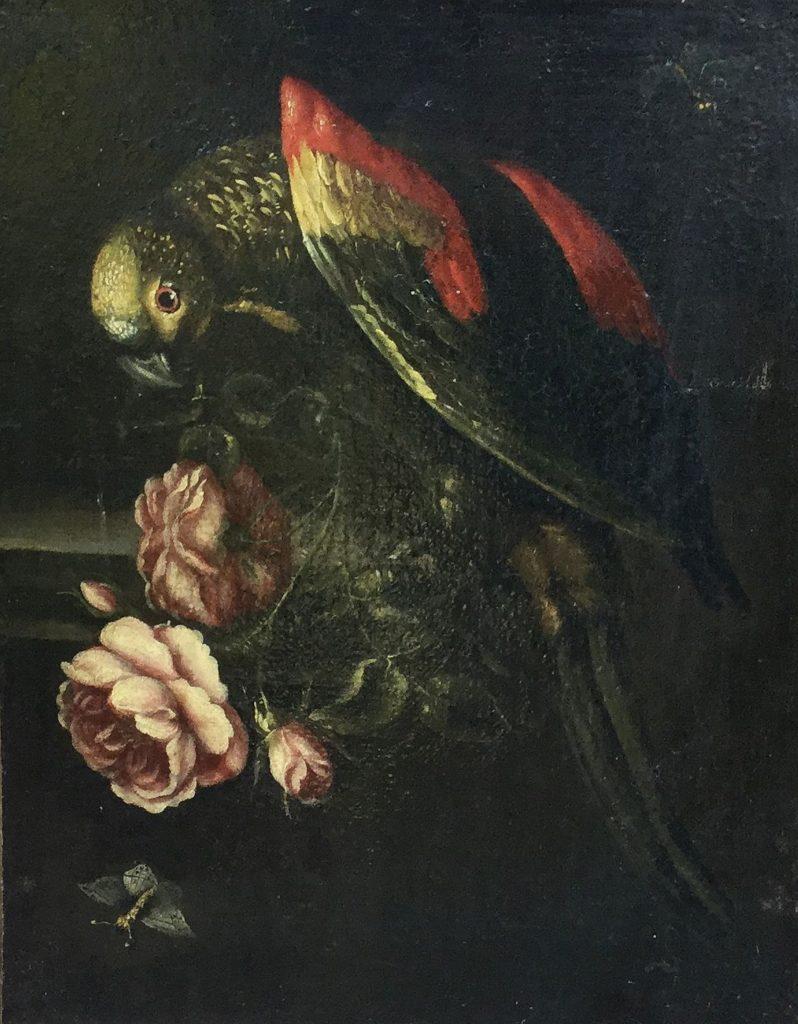 Schilderijen te koop Stilleven met papegaai Hollandse School, 20ste eeuw, Expositie Galerie Wijdemeren Breukeleveen