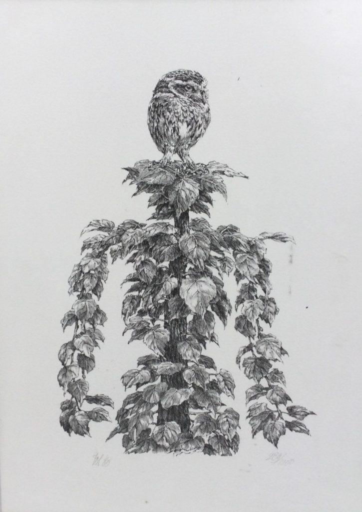 Kunst te koop bij Galerie Wijdemeren van kunstschilder Peter Vos Uil in boomtop litho, 30 x 20 cm linksonder handgesigneerd en gedateerd 85 rechtsonder oplage 289/1250