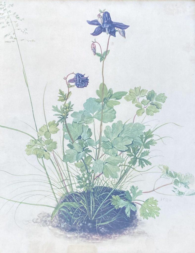 schilderijen te koop, aquarel orchidee beeldmaat 35.5 x 29 cm, expositie, galerie wijdemeren breukeleveen