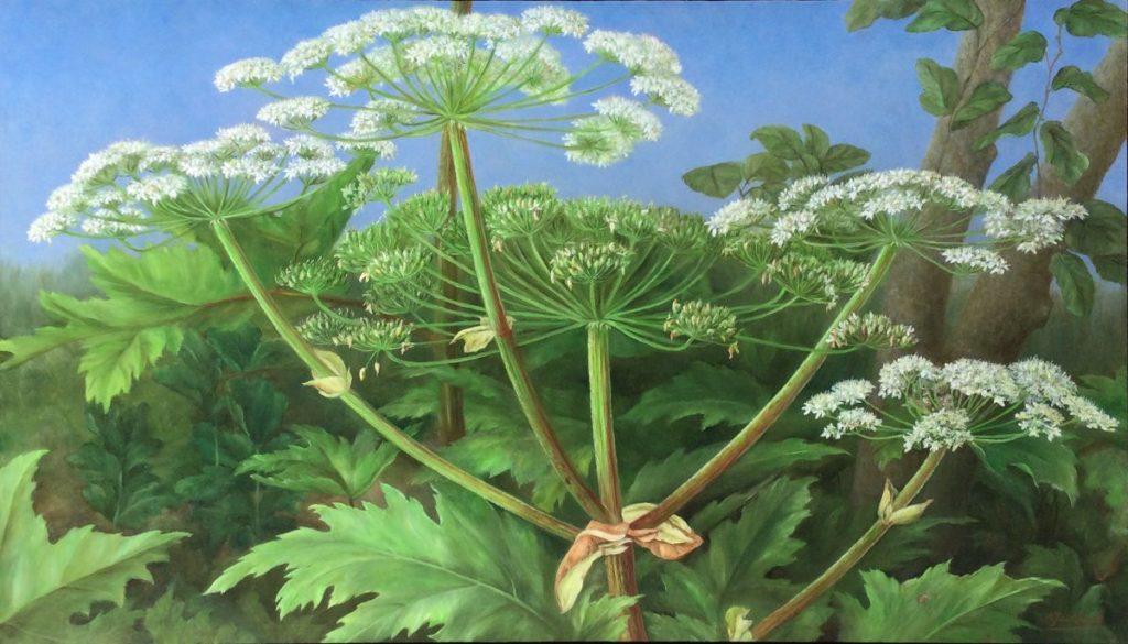 Kunst te koop bij Galerie Wijdemeren van kunstschilder Annelies Jonkhart Berenklauw olie op paneel, 40 x 70 cm rechtsonder gesigneerd